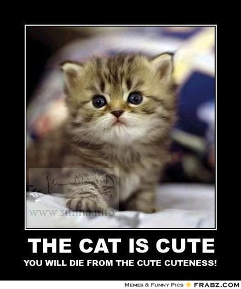 Cute Cat Meme Generator - the cat is cute wildcare meme generator posterizer