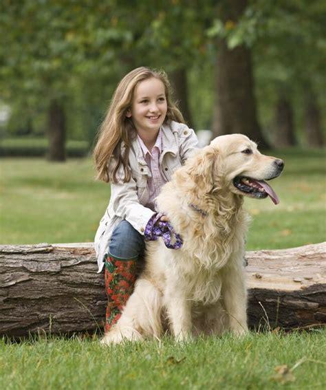 top  family friendly dogs golden retriever