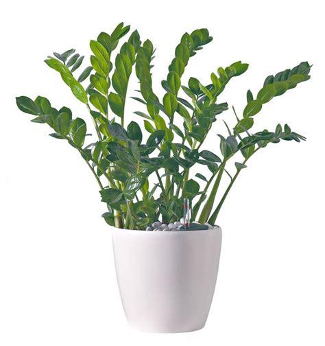 plante d intérieur originale plante d int 233 rieur laquelle choisir quand on n a pas la verte c 244 t 233 maison