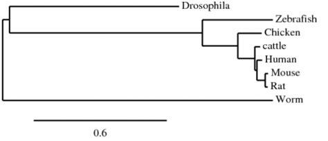 Aligning multiple datasets/combining multiple msas. Protein - Autism (NRCAM)