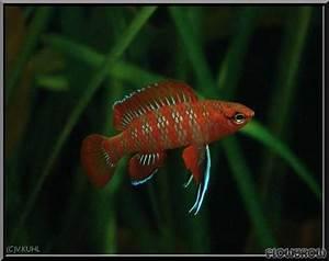 Die Besten Aquarien : fische f r s wasseraquarien mx24 hitoiro ~ Lizthompson.info Haus und Dekorationen