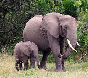 Mother and Baby Elephant | Wild baby elephant and mother ...