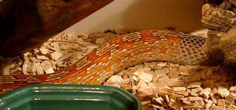 snake shedding skin picture