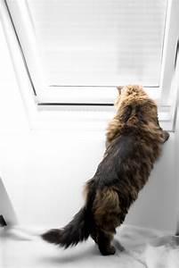 Wie Putze Ich Fenster Optimal : dachfenster katzensicher machen so geht 39 s ~ Markanthonyermac.com Haus und Dekorationen