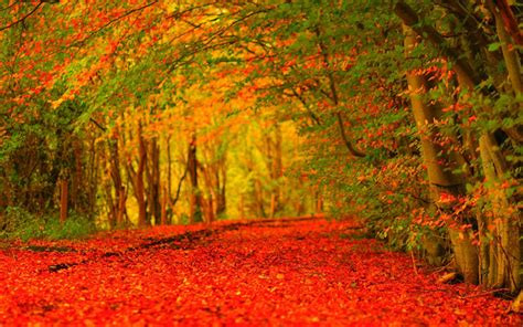 Android Hd Autumn Wallpapers by Autumn Wallpaper Hd 183 Free Wallpapers For