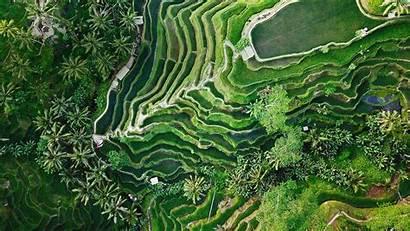 Tegallalang Bali Indonesia Ubud Wallpapers Terrace Aerial