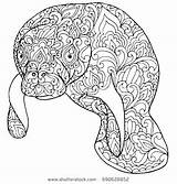 Manatee Coloring Printable Zentangle Doodle Cow Sea Adult Shutterstock Vector Patterned Fantasy Getcolorings Florida Patterns Adults Animal Isolated доску выбрать sketch template
