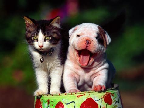 Happy Wallpaper Cats And Dogs by Happy Cat And Wallpapers And Images Wallpapers