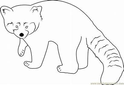 Panda Coloring Pages Toward Looking Coloringpages101 Pandas