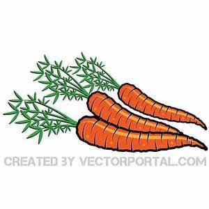 CARROTS VECTOR ILLUSTRATION - Download at Vectorportal