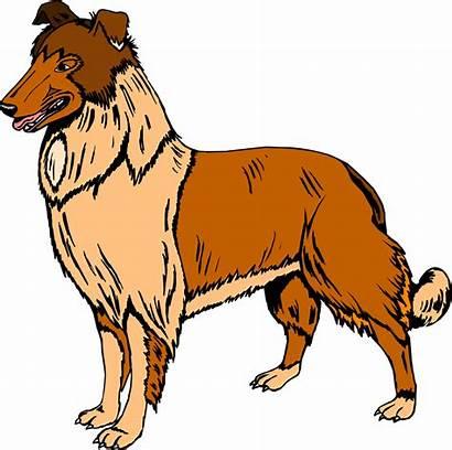 Collie Dog Illustration