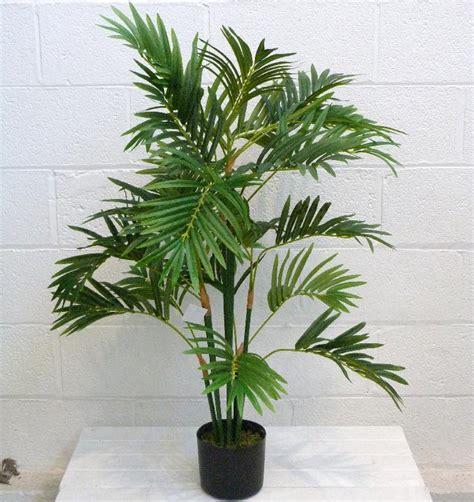areca palm parlor palm areca palm