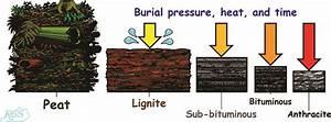 Coal Diagrams For Download  Kentucky Geological Survey