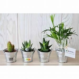 Plante Publicitaire Mini Plante Dpolluante De Bureau