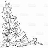 Outline Corner Flower Leaf Vector Bluebell Background Bouquet Bellflower Bell Bud Campanula Drawing Illustration Floral Isolated Coloring Drawings Plant Pattern sketch template
