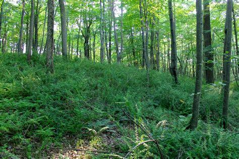 Controlling Invasive Plants To Improve Deer Habitat