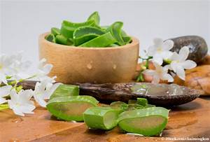 Aloe Vera Gel Anwendung : beauty tipp aloe vera beautypunk ~ Frokenaadalensverden.com Haus und Dekorationen
