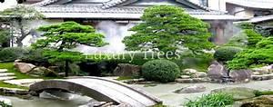 gartenbau landschaftsbau von luxurytreesr With garten planen mit deko bonsai kunststoff