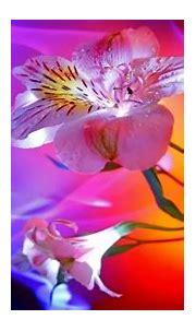 Flower hd wallpaper nature 3D