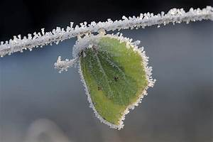 Was Machen Schmetterlinge Im Winter : naturwissenschaftlicher verein f r schwaben e v ~ Lizthompson.info Haus und Dekorationen