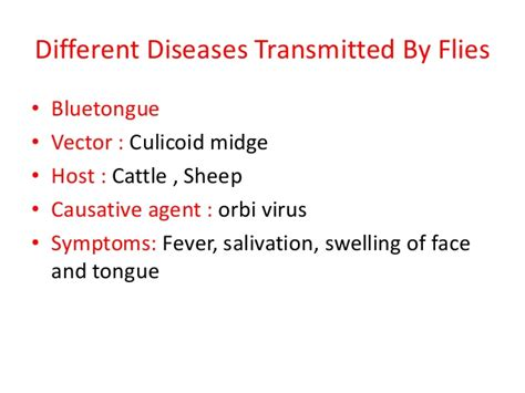 Disease Transmitted By Flies
