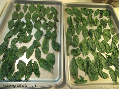 can you freeze basil freezing fresh basil whole leaf mamal diane