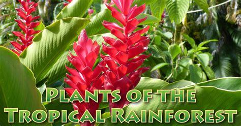 plants   tropical rainforest pictures facts information