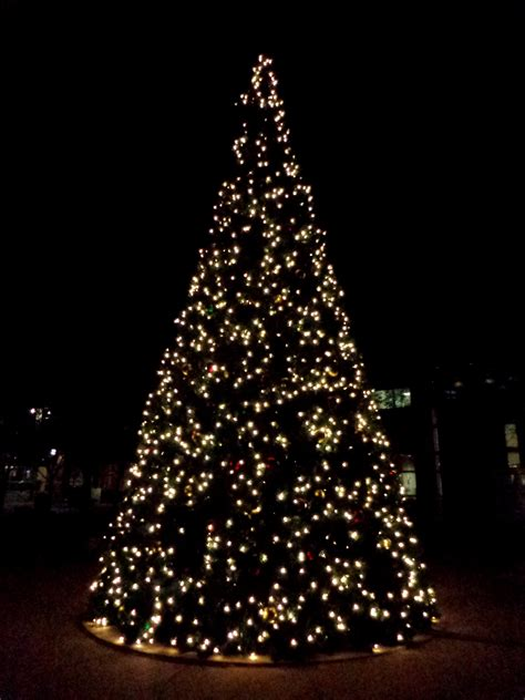 christmas lights in trees white christmas tree lights at night picture free