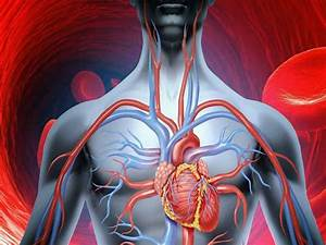 How To Improve Your Blood Circulation In The Most Natural