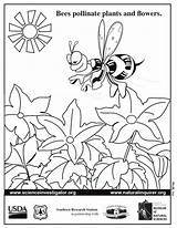 Coloring Bee Pollen Bees Pollinator Pdf Sheet Sheets Pages Science Students  Users Fnl Prek Activities sketch template