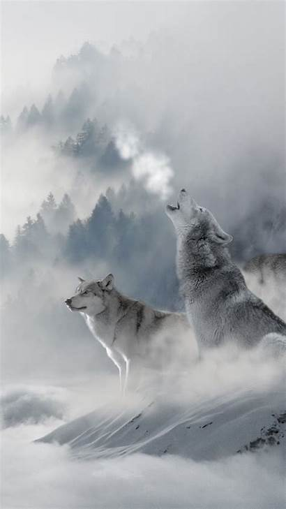 Wolf Iphone Wallpapers Winter Vigour Wolves Animal