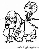 Hound Basset Coloring Fox Drawing Dog Puppy Template Flower Drawings Disney Popular Getdrawings Sketch sketch template