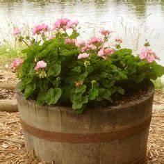 Balkonpflanzen Hängend Pflegeleicht : pink geranium geranien pinterest ~ Lizthompson.info Haus und Dekorationen