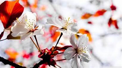 Spring Season Wallpapers Wallpapertag