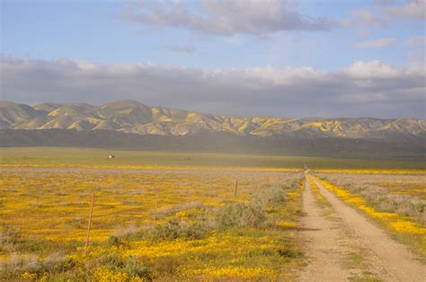 EMPTY: The Inland Island of the Carrizo Plain | FEEDING ...