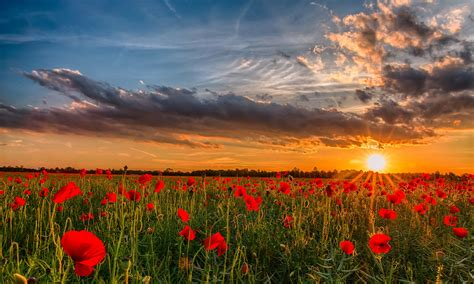 hd wallpapers flowers widescreen images free download