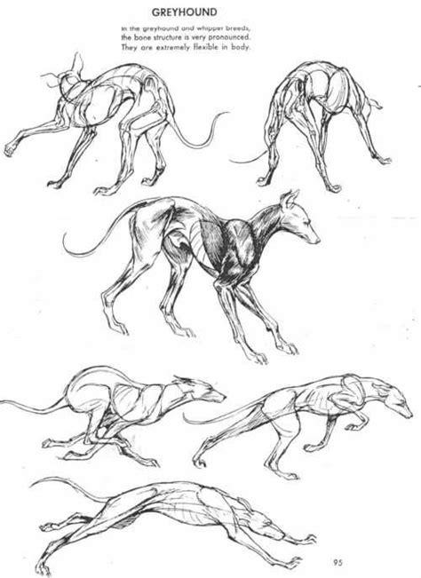 ideas  dog anatomy  pinterest