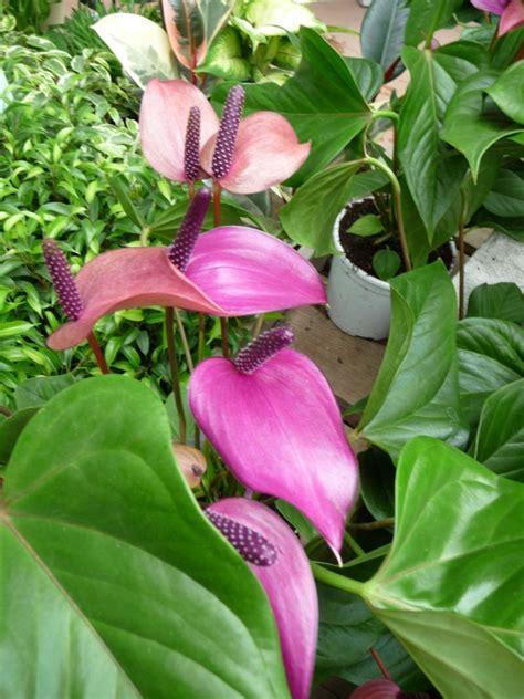 plante fleurie d int 233 rieur c 244 t 233 jardin