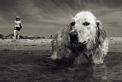 Man's Best Friend  Dogs In Photography