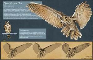 Great Horned Owl Skeleton