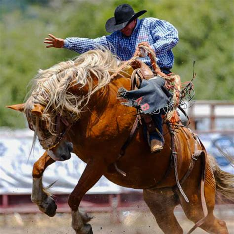 russian river rodeo russian river rodeo