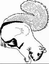 Squirrel Coloring Pages Coloring2print sketch template
