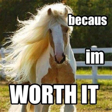funny captions animal horse memes im worth because horses mad animals meme lol hilarious hair equestrian jill they