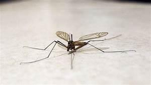 Mücken Im Schlafzimmer Bekämpfen : m cken schnell und einfach aus dem zimmer bekommen frag mutti ~ Markanthonyermac.com Haus und Dekorationen