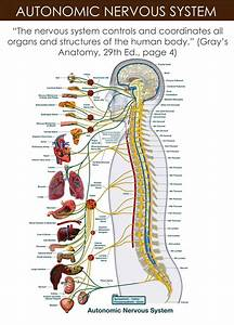 49 Best Chiropractic  Educational Images On Pinterest