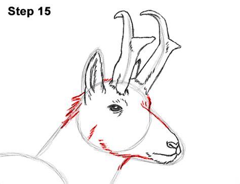 draw  pronghorn