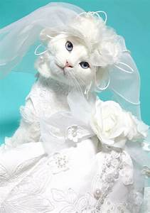 Funny cat wedding dress for Cat wedding dress