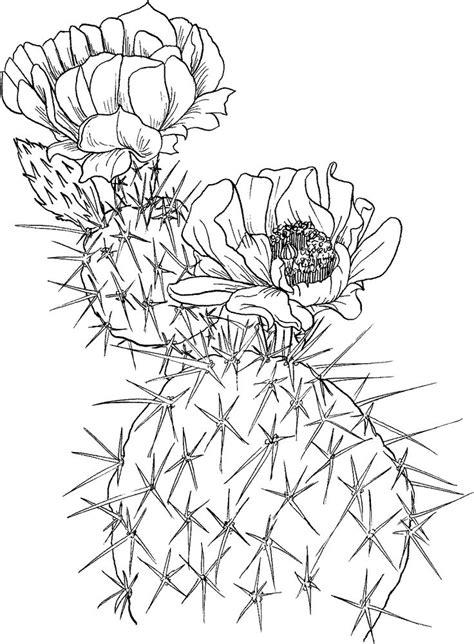17 best Cactus Printables images on Pinterest   Succulents