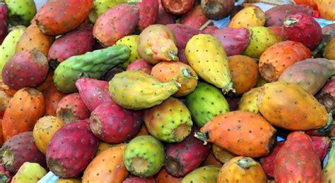 la cuisine mexicaine figue de barbarie nopal plantation entretien et récolte