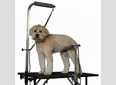 Grooming Tables For Dogs The Groomer's Mall Pet Handling